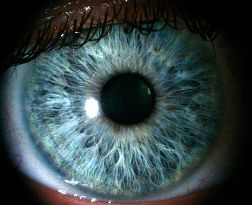 Ray_eye
