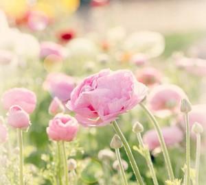 morning-flowers